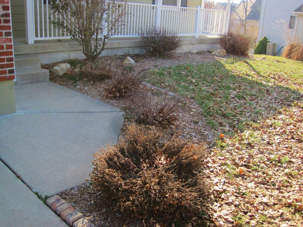front bushes before