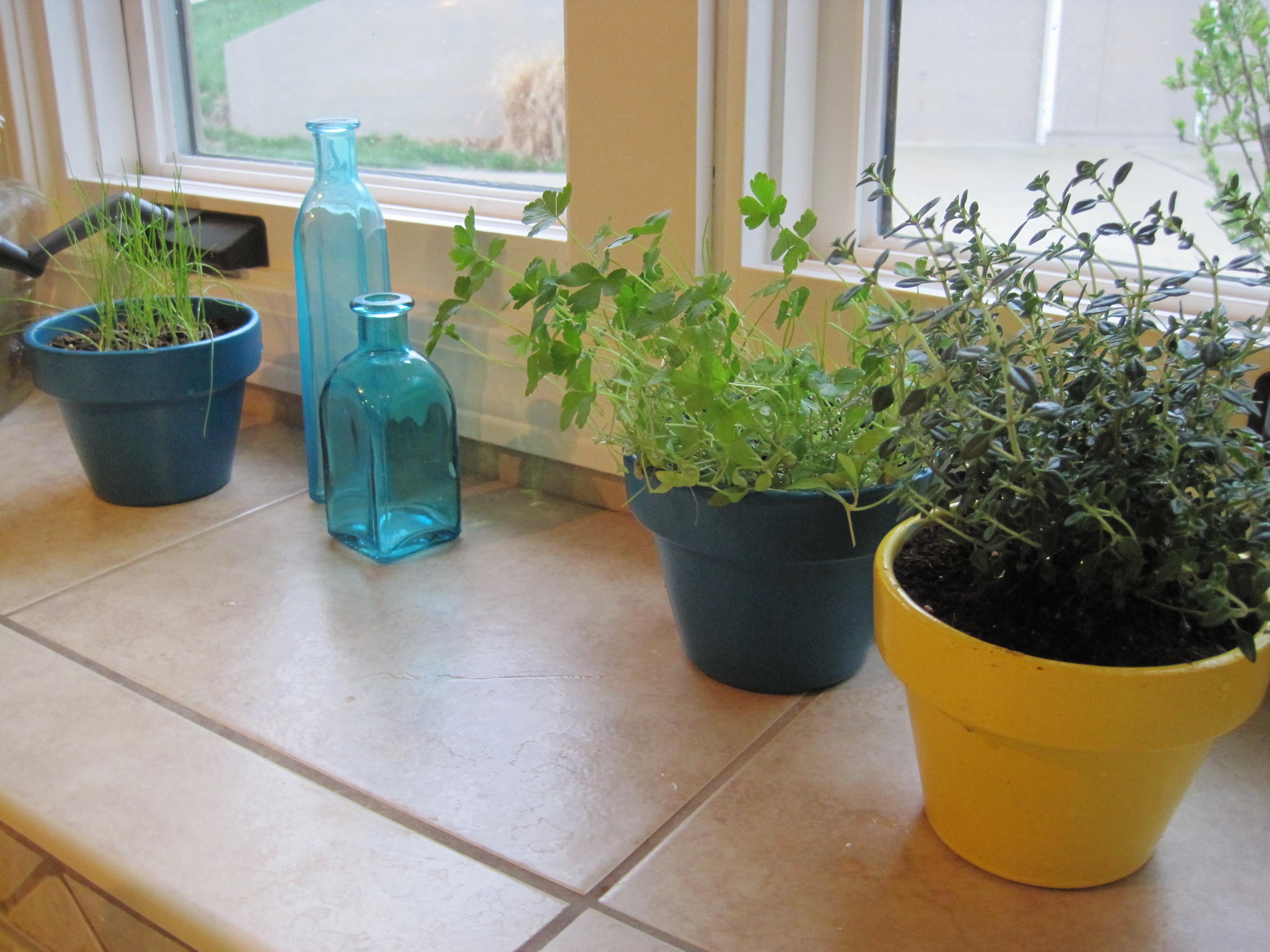 healthy herbs 4