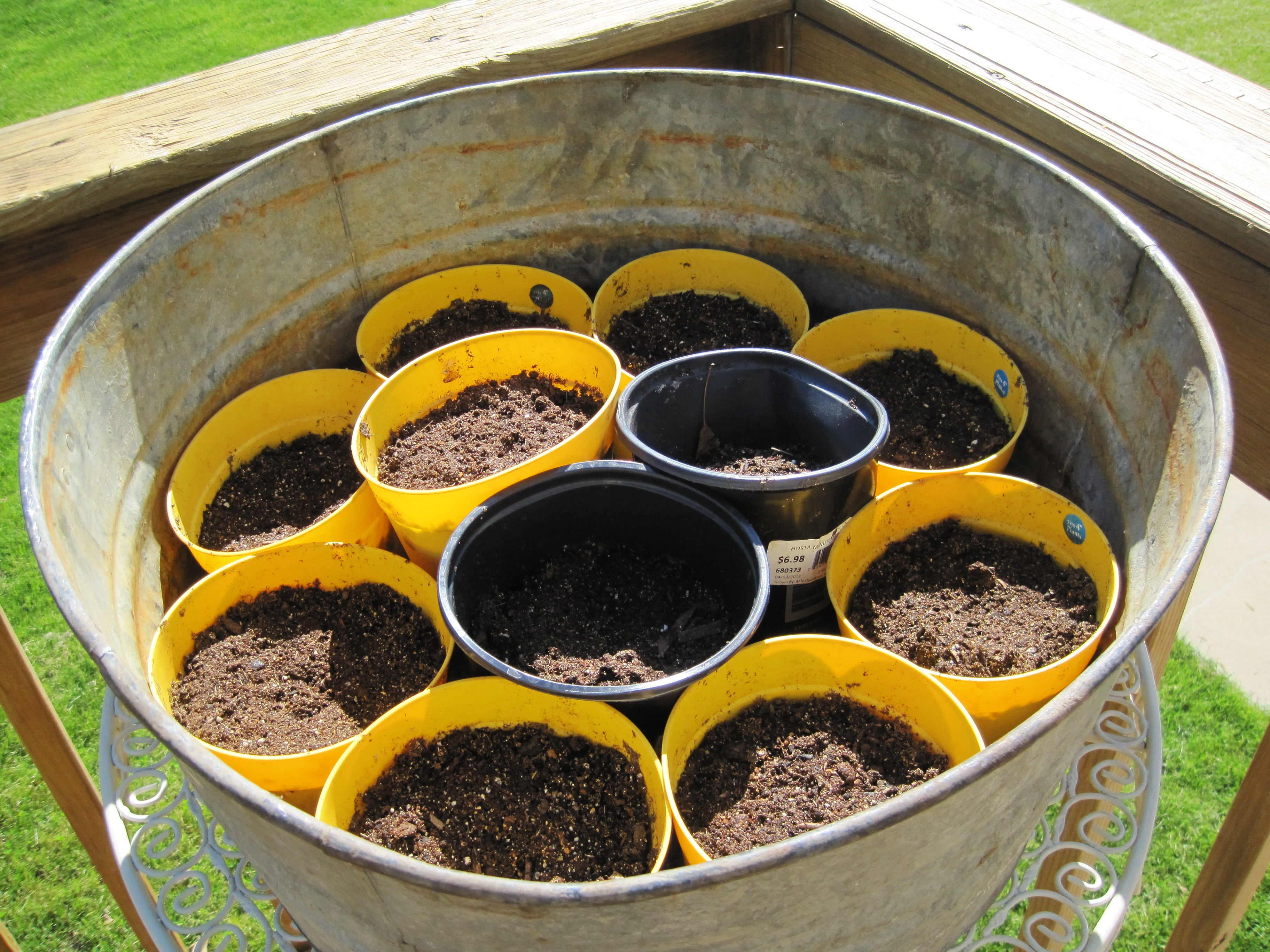 Planted Spinach Seeds