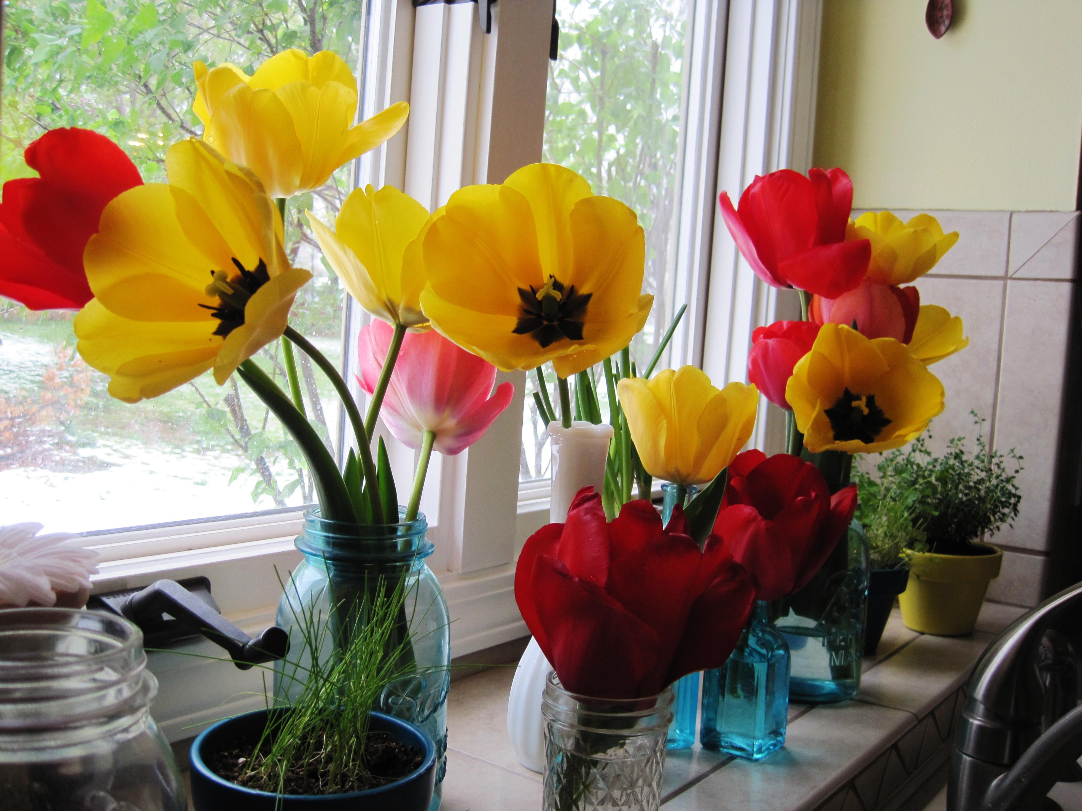 Tulips in Kitchen 3
