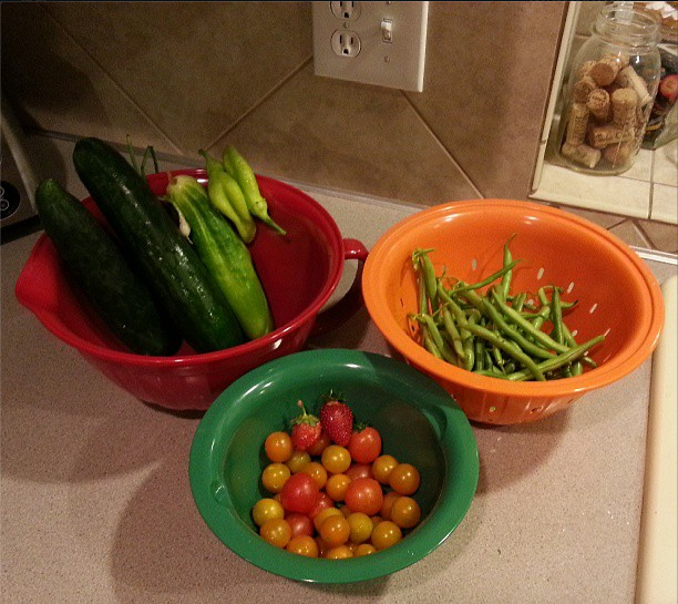 Daily Harvest