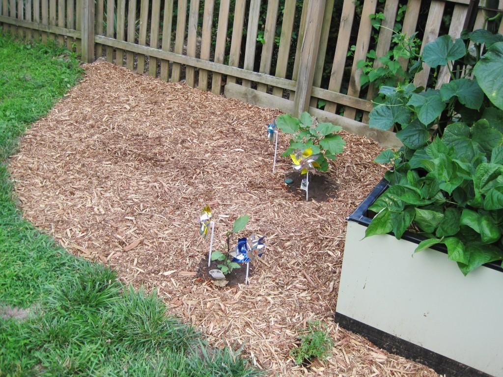 Mulched Garden 2