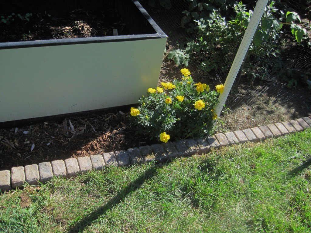 Edge Stone For Garden: An Eco-Edge: (Yet Another Garden Project)