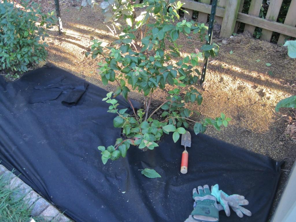 Wedd Barrier Over Berries