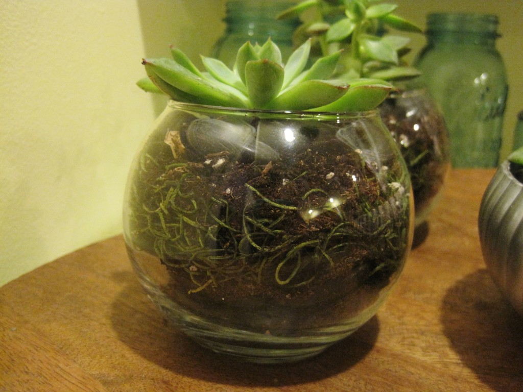 Finished Succulent Terrariums6