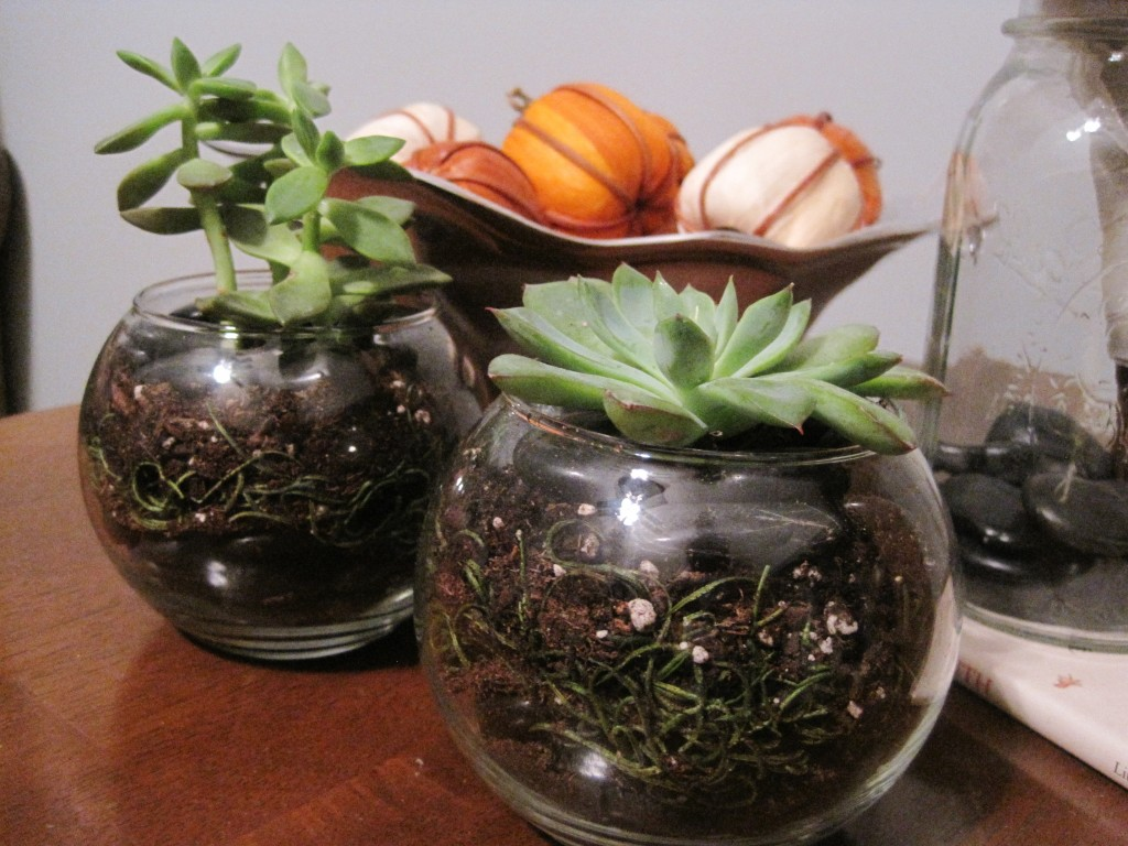 Finished Succulent Terrariums7