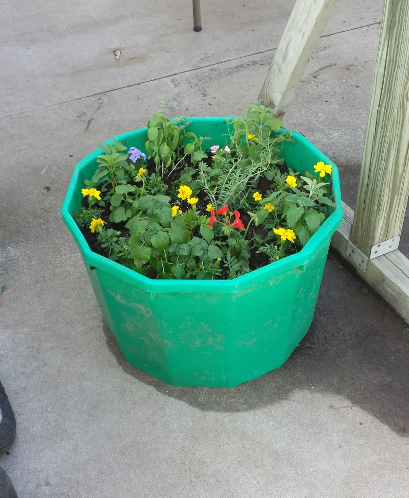 Mosquito repelling planter