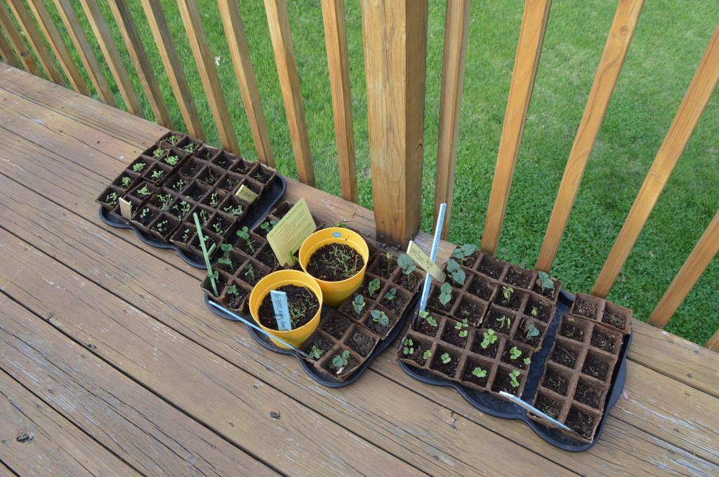 Seedlings 2014