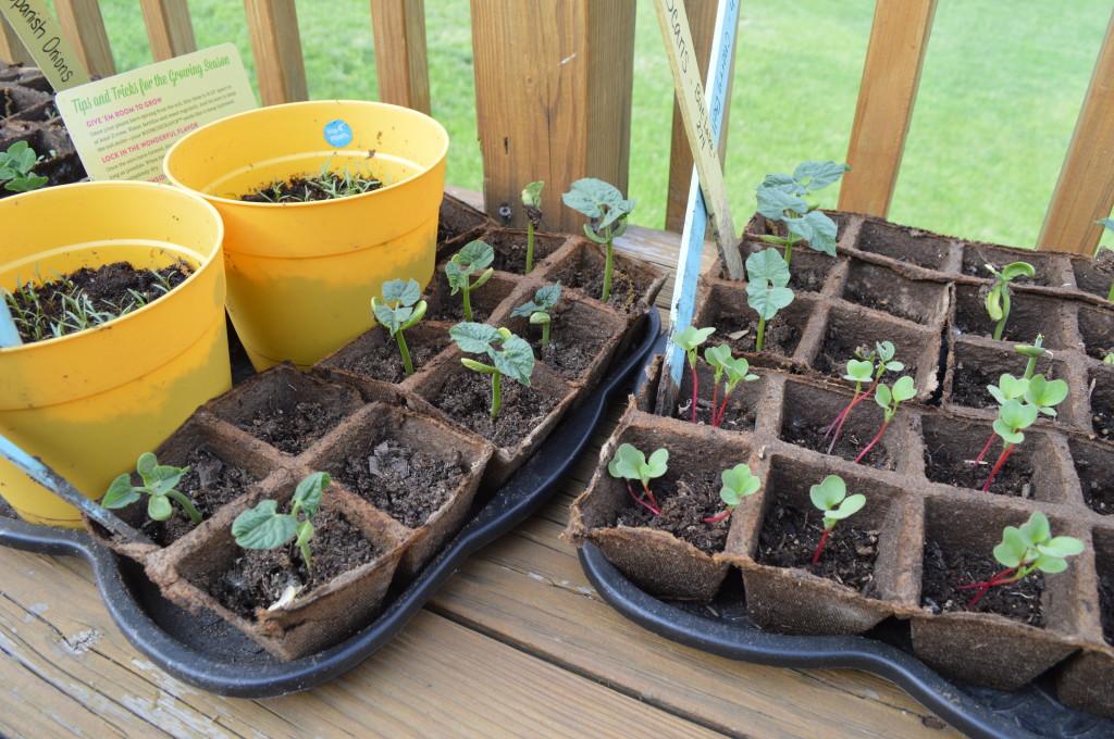 Seedlings 2014 2