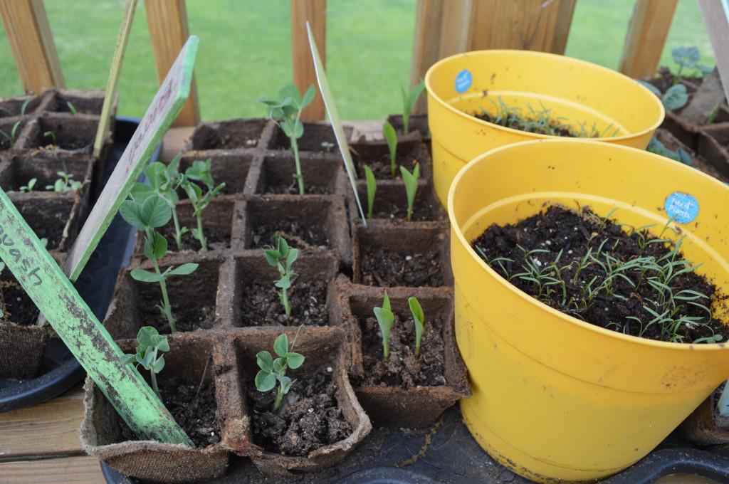 Seedlings 2014 3