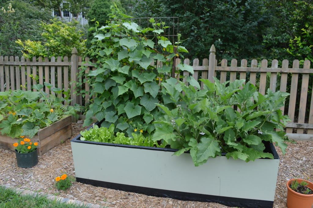 Garden July 2014