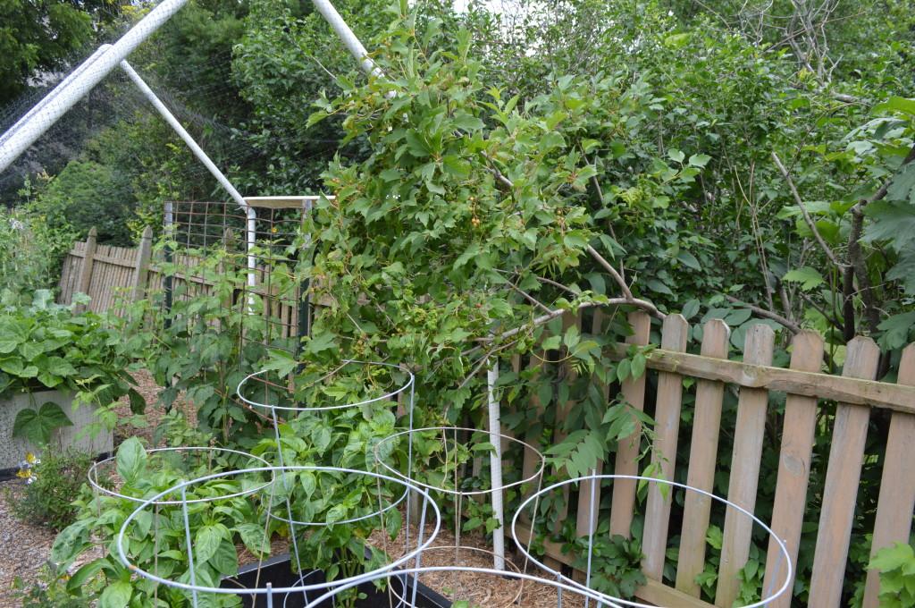 Tree Overhanging Garden