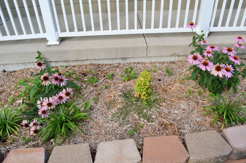 Weedy Front Flowerbeds 2