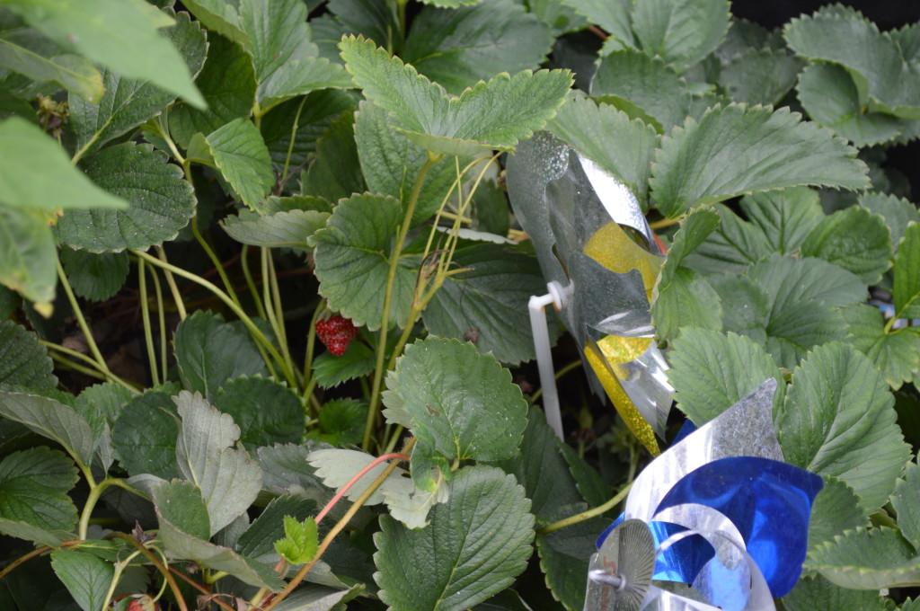 August Garden Update 11