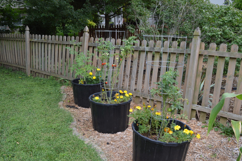 August Garden Update 2