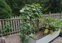 August Garden Update 3