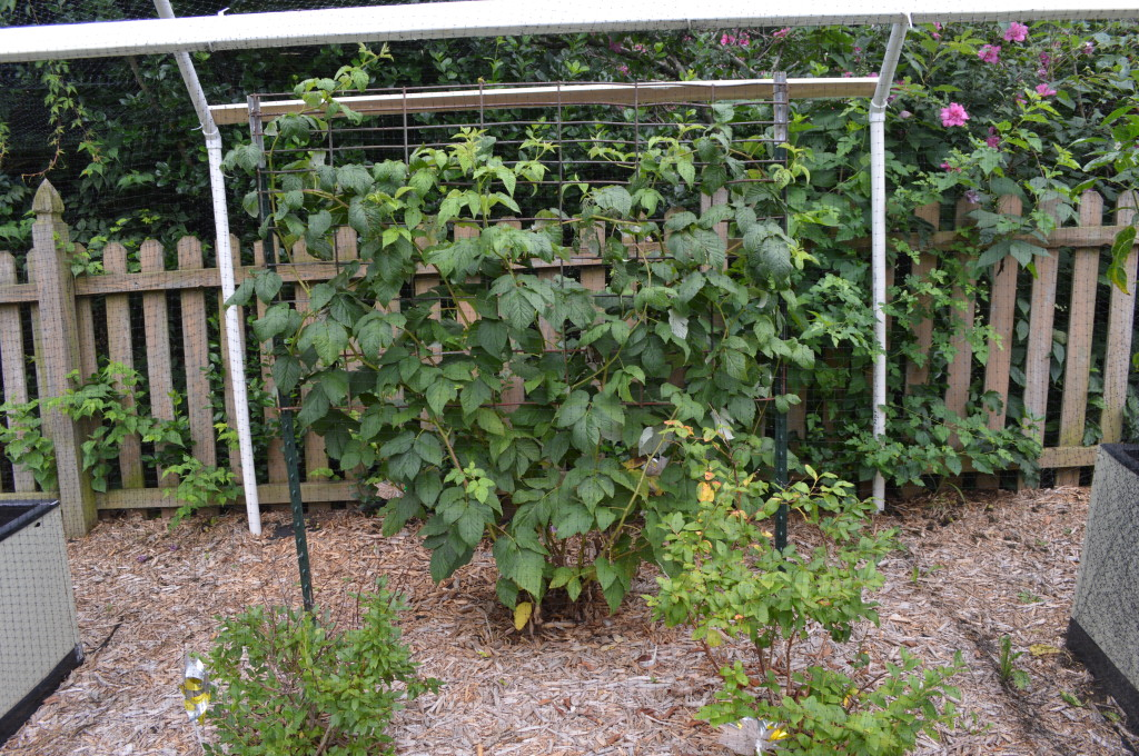 August Garden Update 7