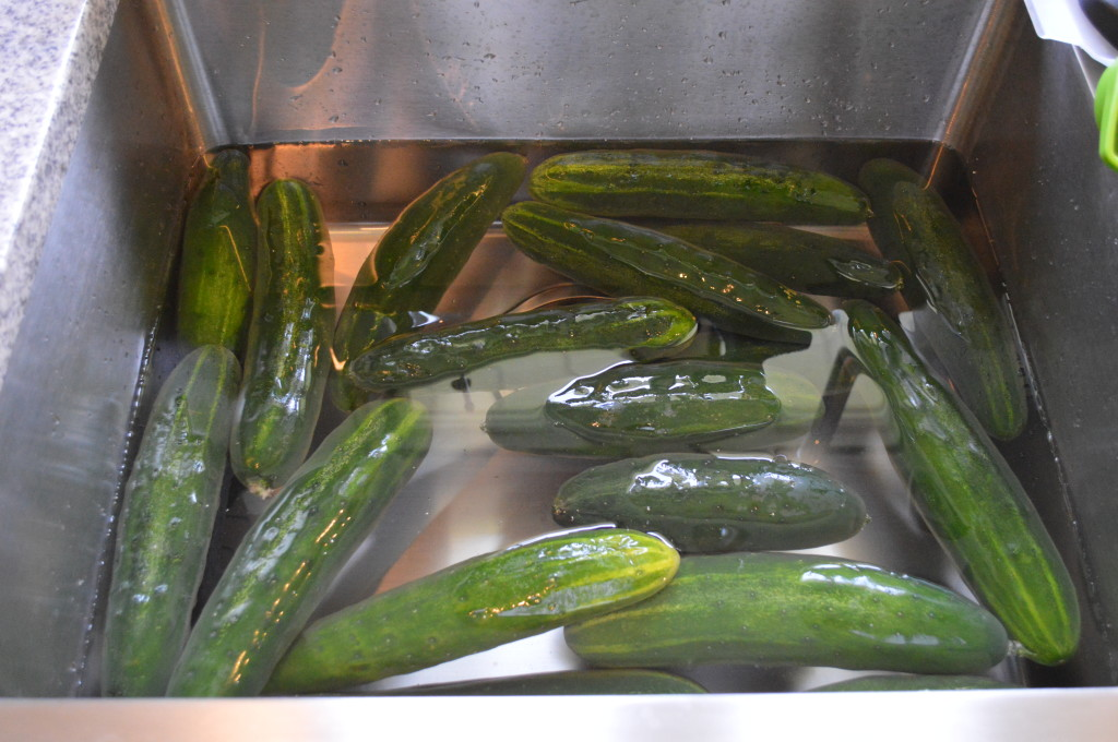 Lots of Cucumbers