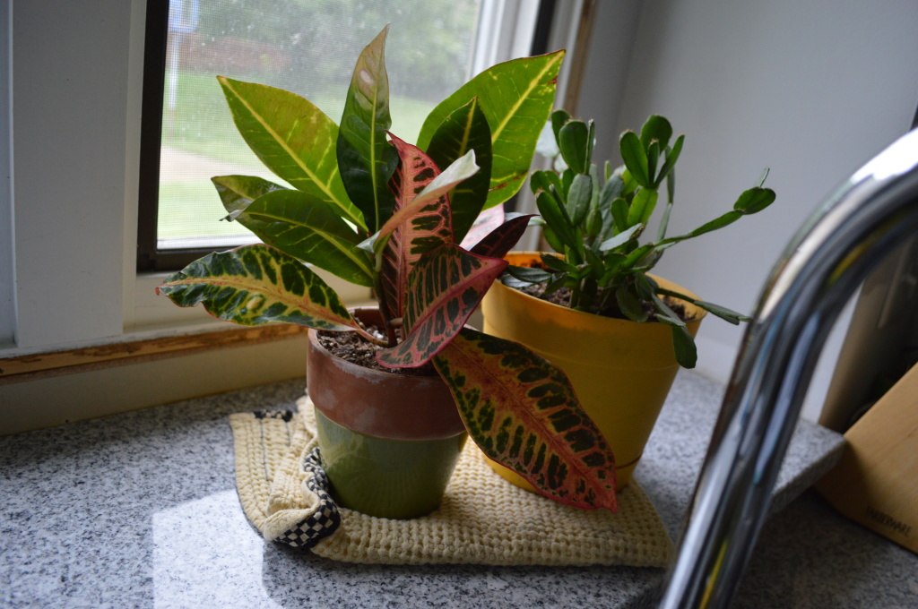 House plants in kitchen window