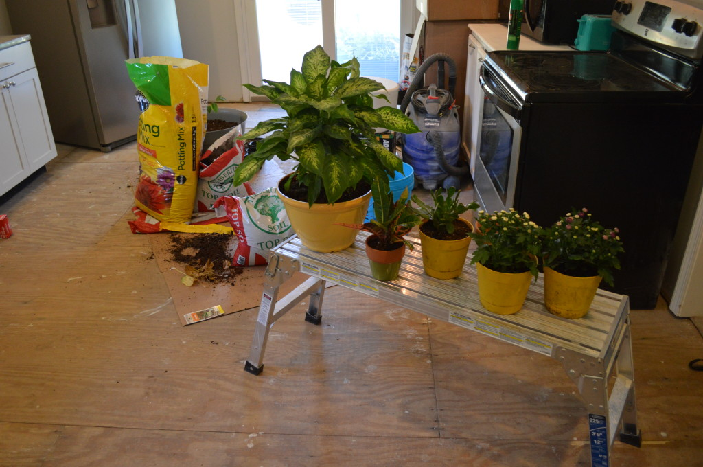Repotting Plants in Kitchen