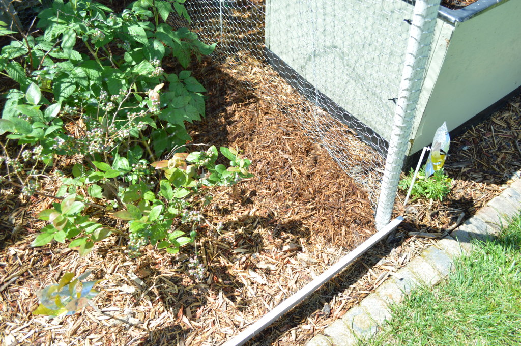 Garden Bird Barrior Mulch 2015 2