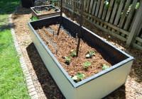 Garden Eggplant 2015