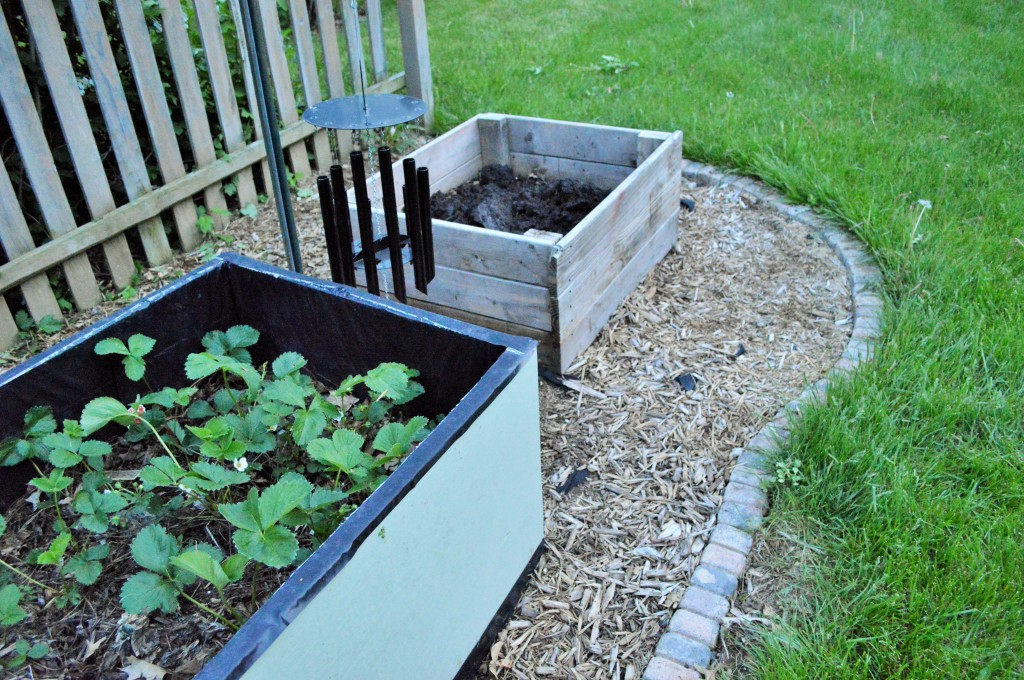 Weeded and Trimmed Garden Prep 2015 2