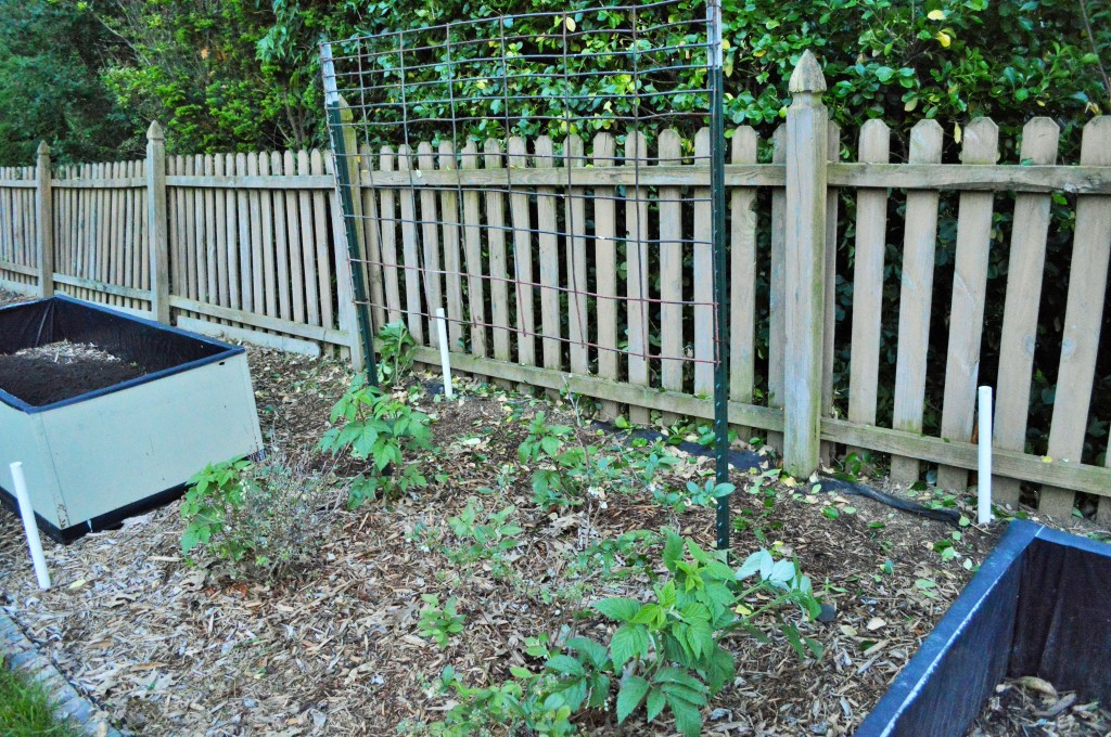 Weeded and Trimmed Garden Prep 2015 3