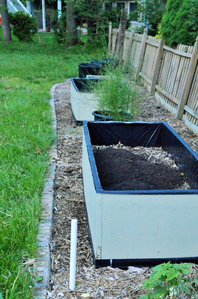 Weeded and Trimmed Garden Prep 2015 5