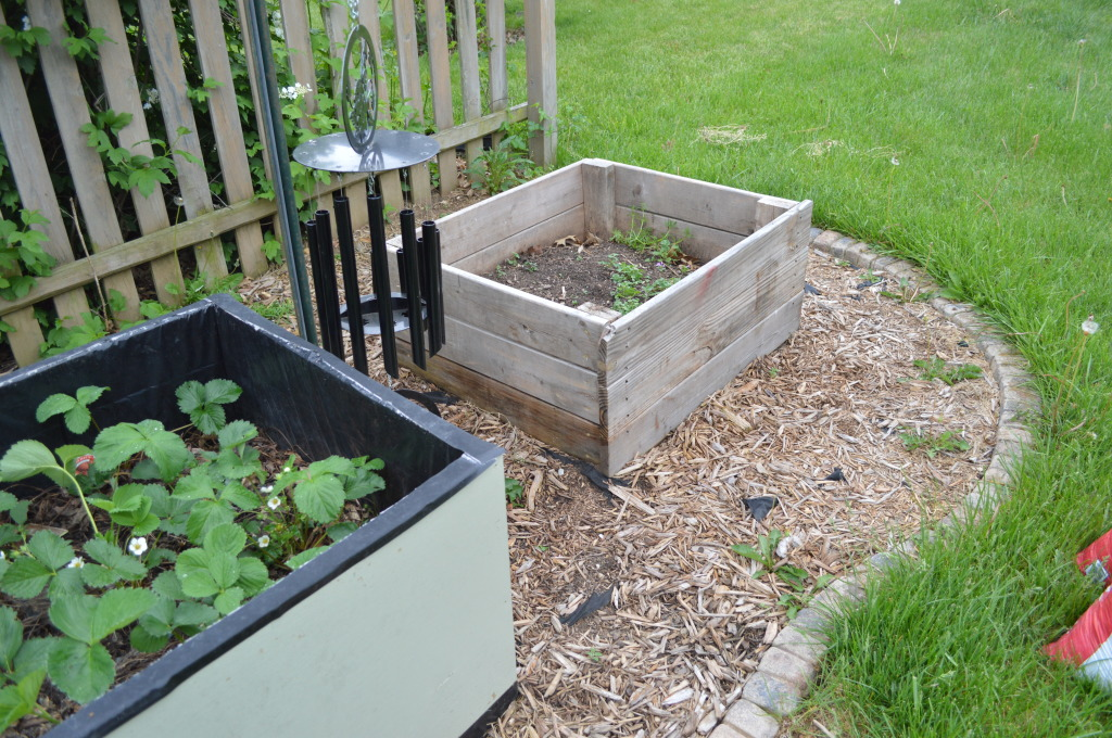 Weeded and Trimmed Garden Prep 2015 Before