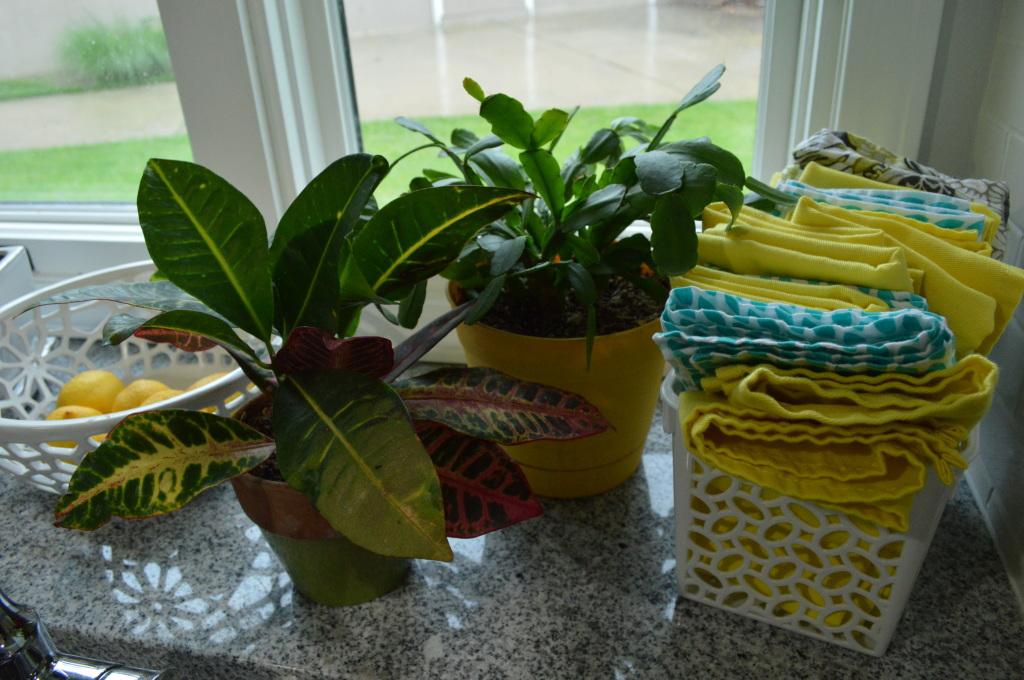 House Plants Growing Well Kitchen Window