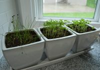 New Herb Garden Kitchen Window Sill