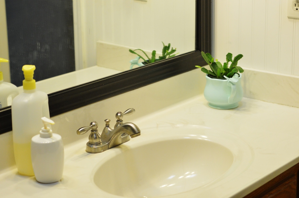 Bathroom Potted Plant Christmas Cactus Cutting