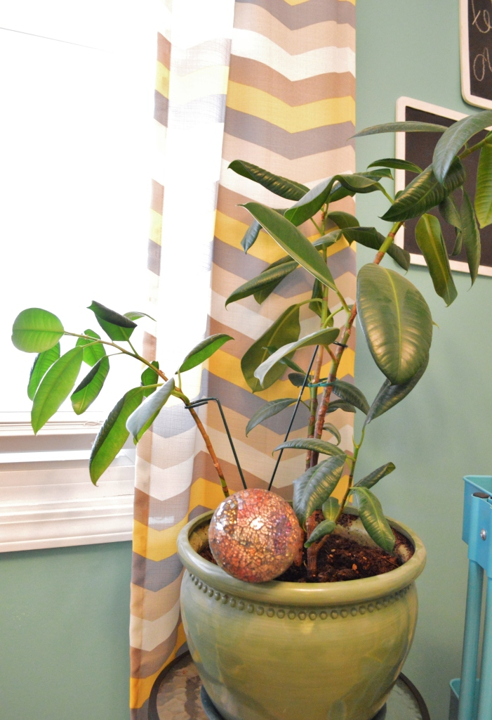 Potted Plants Feb 16