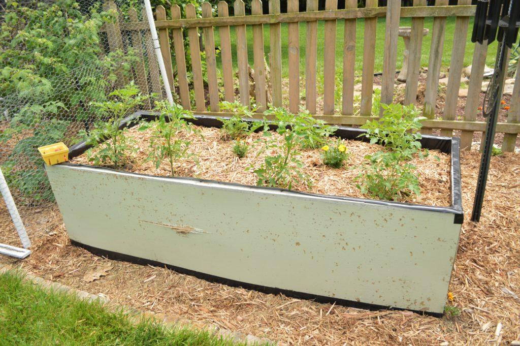 Garden Update Memorial Day Weekend Tomatoes