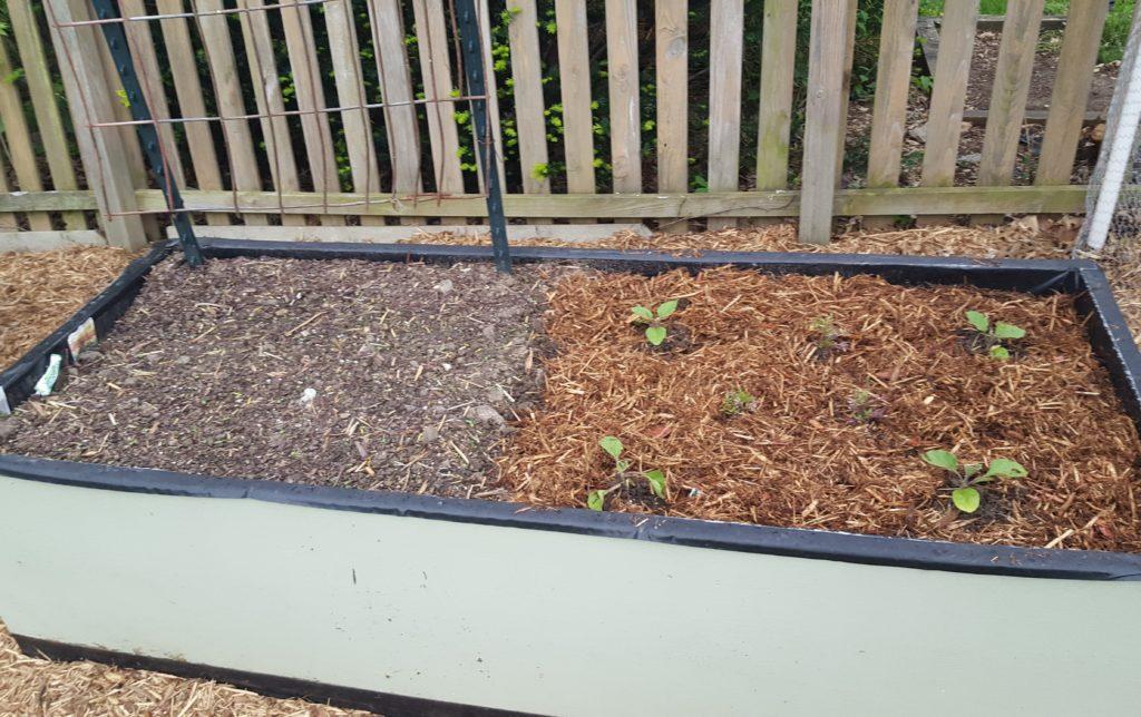 Mulched garden April 2016 3
