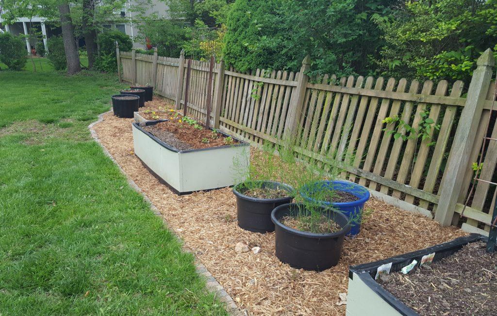Mulched garden April 2016 4