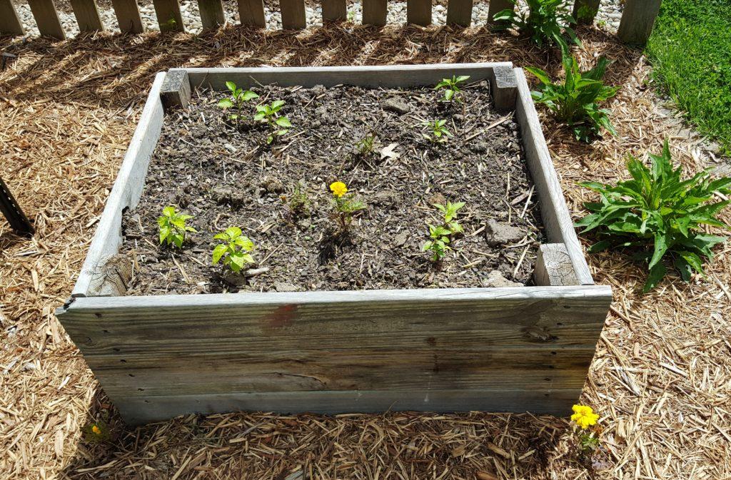 Planted Garden April 2016