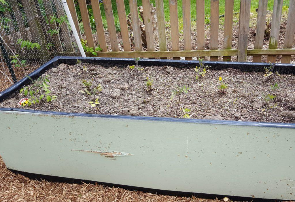 Planted Garden April 2016 2