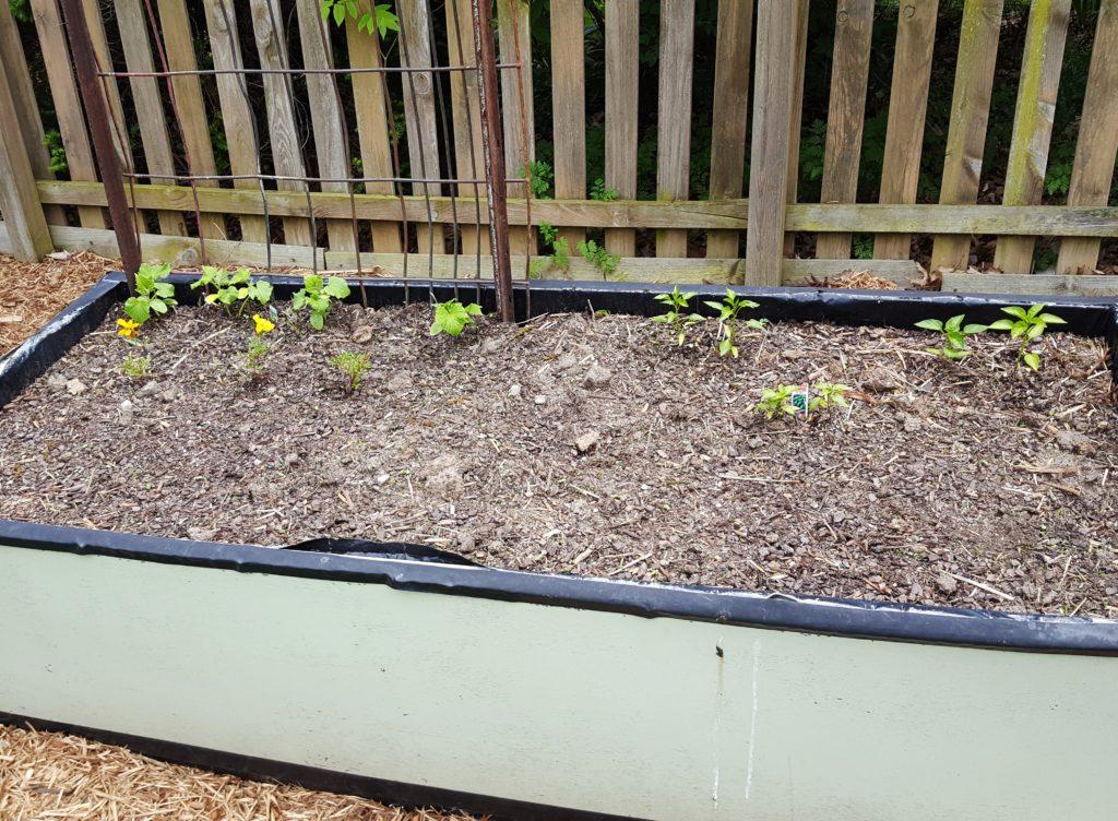 Planted Garden April 2016 5