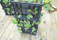 strawberry planter tower from plastic crates planted