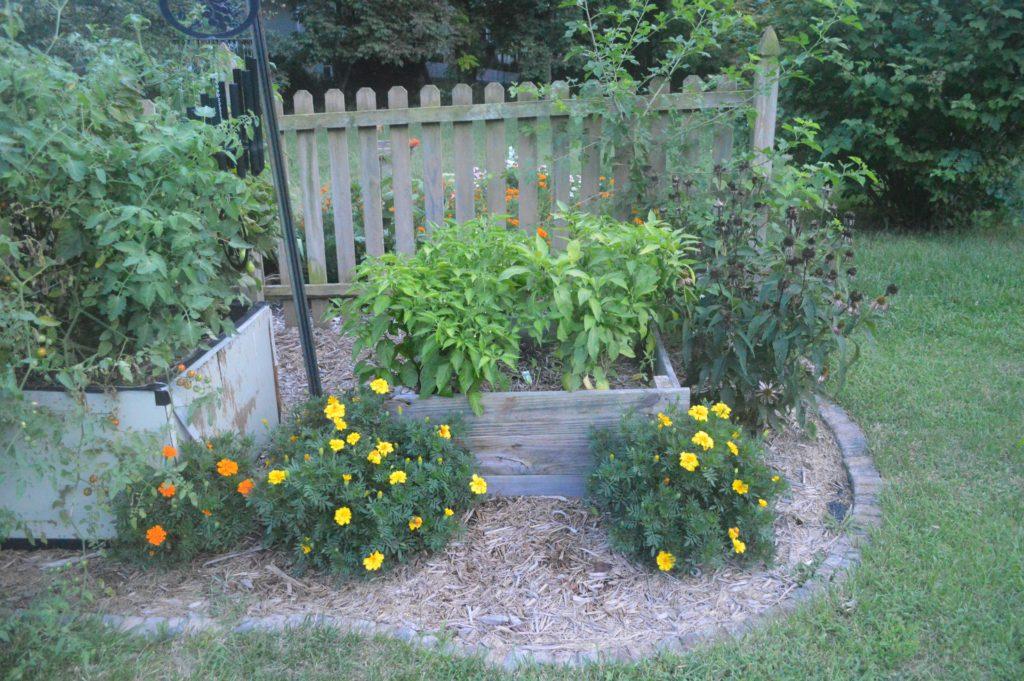 Suburban Garden August Peppers