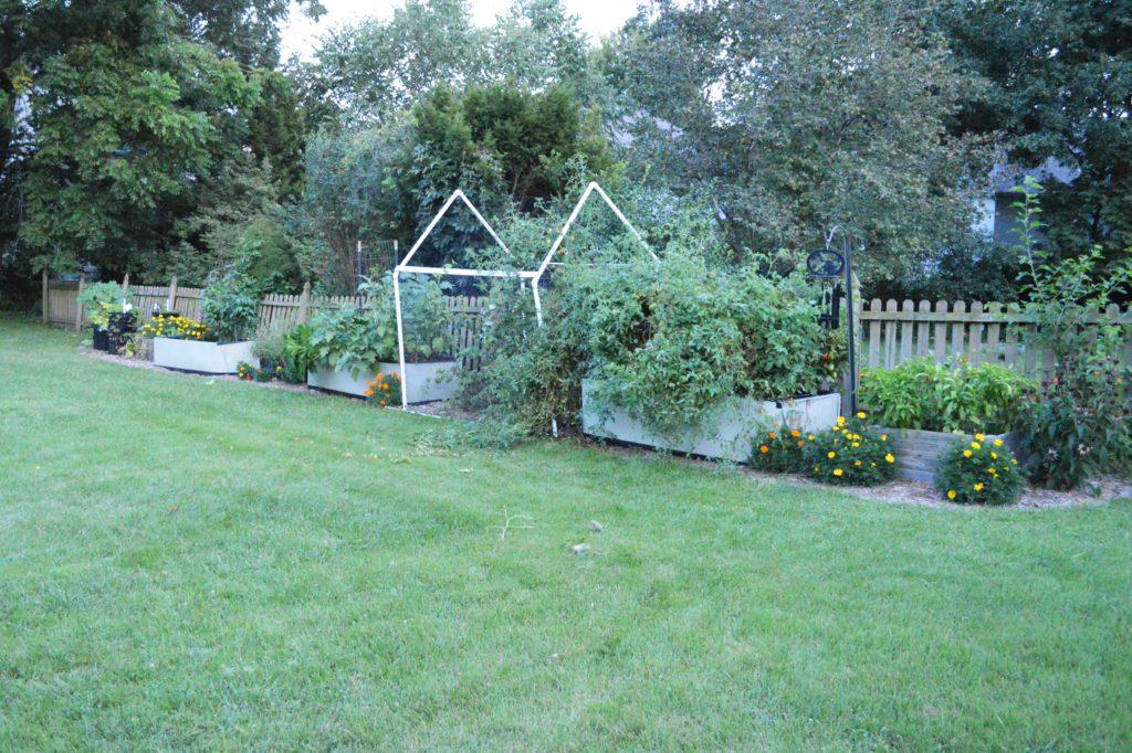 Suburban Whole Garden August