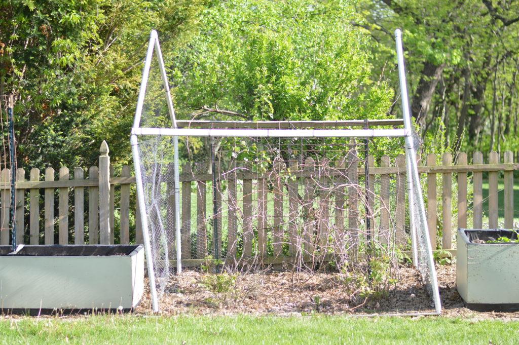 Garden Bird Barrier House April 17
