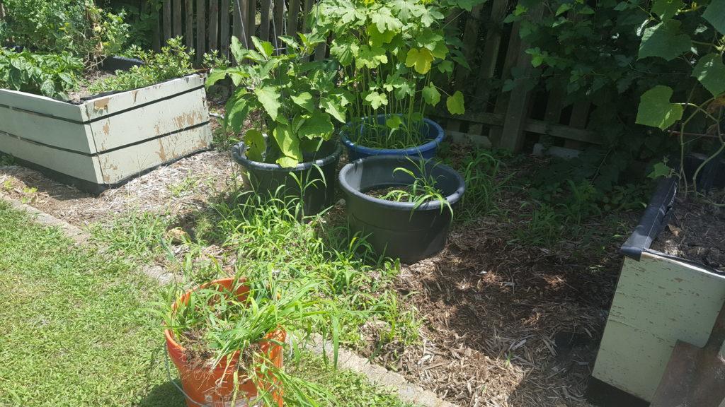 Garden weeds before